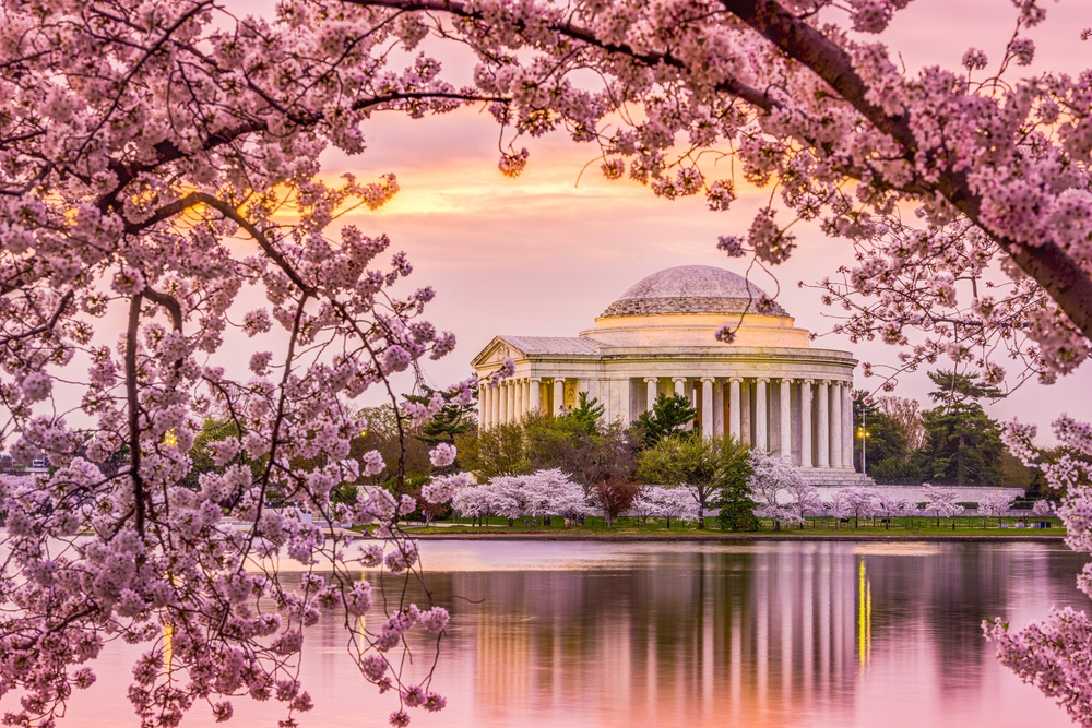 Navigate The 2018 Cherry Blossom Festival With Ease